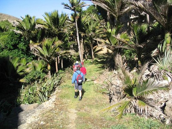 Westhaven Luxury Lodge : Hiking through the Nikau Forest
