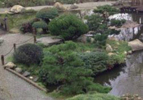 Hakone Gardens: bushes