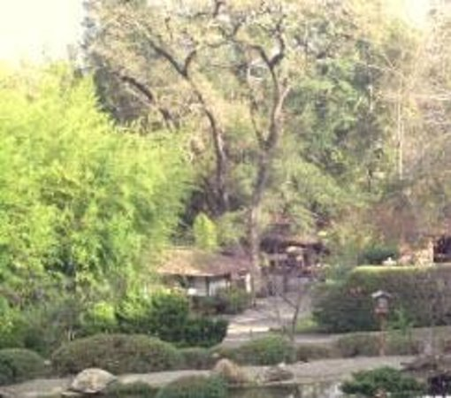 Hakone Gardens: trees