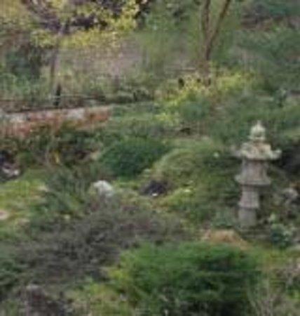 Hakone Gardens: garden