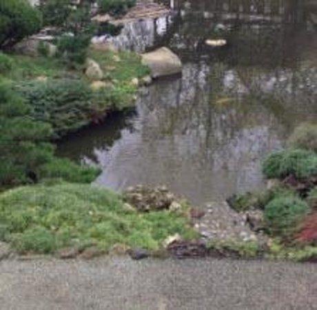 Hakone Gardens: pond