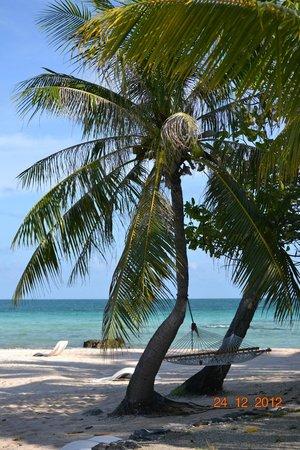 Tikehau Pearl Beach Resort: Vue depuis le bungalow