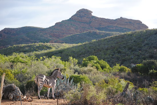 Zwartberg View Mountain Lodge : the most beautiful setting in africa!