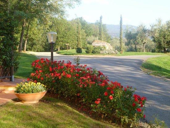 Agriturismo Petrognano: Driveway