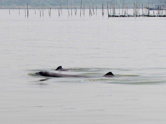 Dolphin spotting at Chilka lake