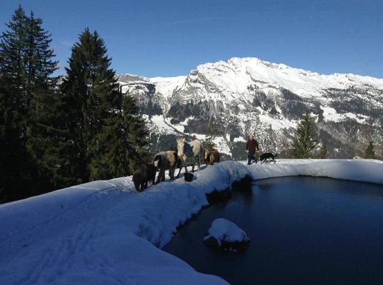La Ferme des Vonezins: lago con los ponys y Philippe