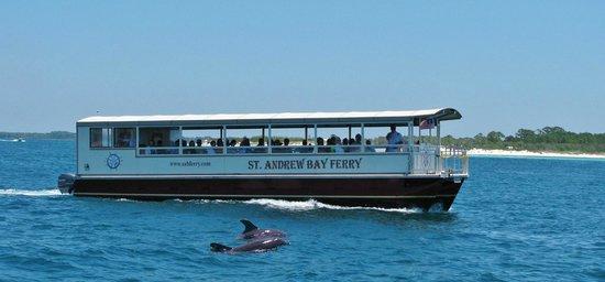 St. Andrew Bay Ferry Company Shell Island, Dolphin & Restaurant Hopping Cruises