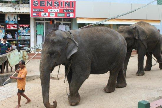 Hotel Elephant Park: ce que l'on voit dans la rue