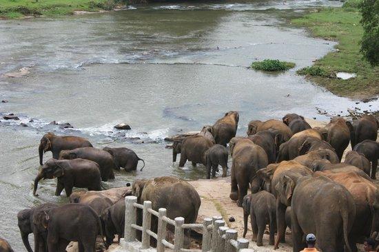 Hotel Elephant Park: vue de notre chambre