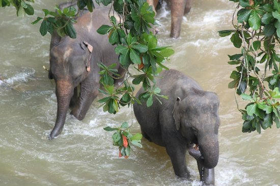 Hotel Elephant Park: .