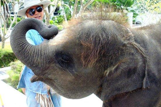 Marriott's Mai Khao Beach - Phuket: Baby-Elefant