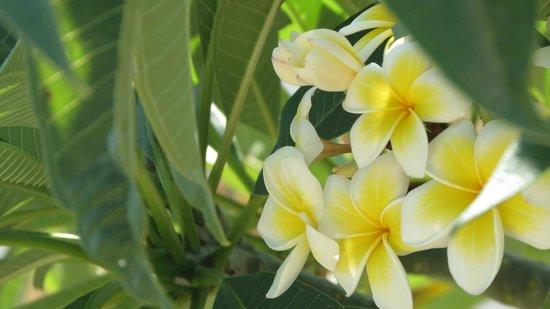 The Hamsa Bali Resort: The Hamsa and surrounding