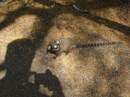 Urca Beach: Fauna