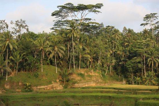 Bali Explore Tours: Jungle