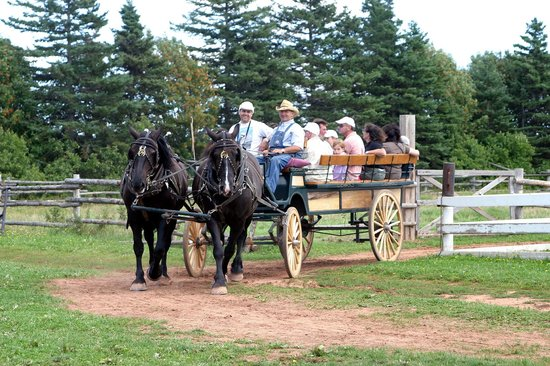 Avonlea Village: Horse and Buggy- the only way to travel- literally.