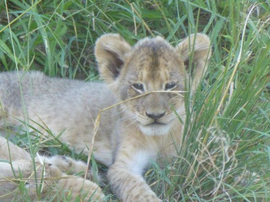 Dulini River Lodge: Furry Friends