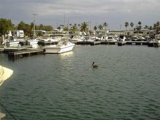 Sunshine Key RV Resort & Marina: marina