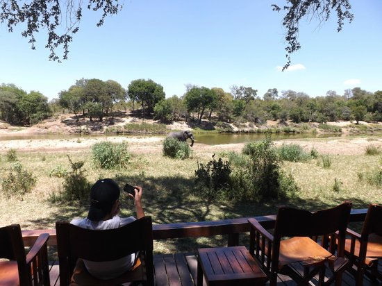 Simbavati River Lodge: Elephants walking by viewing deck