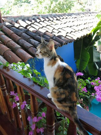 Miss Margrit's Guest House: the cat upstairs