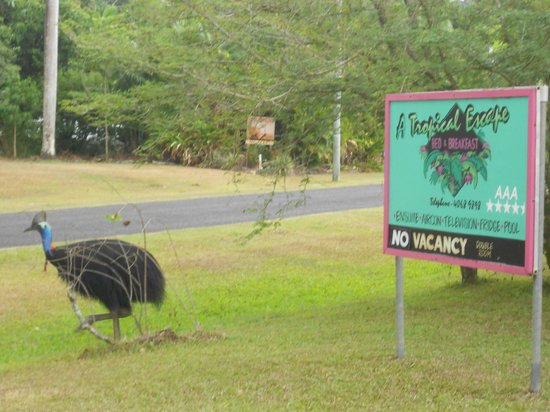 A Tropical Escape B&B: Cassowary leaving