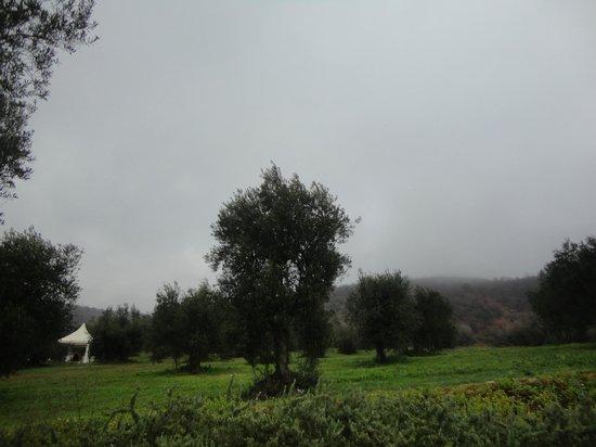Antico Casale di Montegualandro: parco