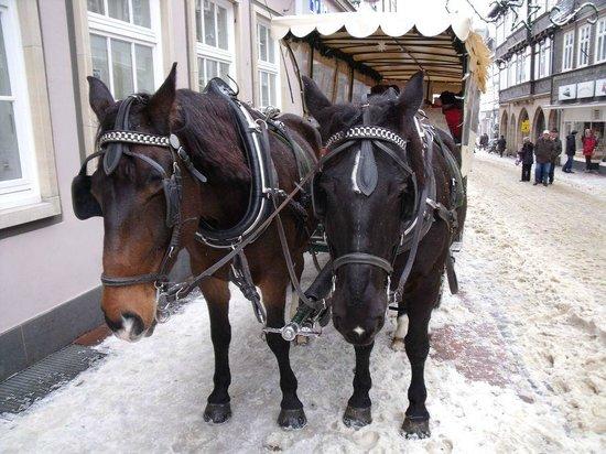 Hotel Alte Münze: Horse Drawn Tour