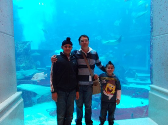 Atlantis, The Palm: The Lost Chambers