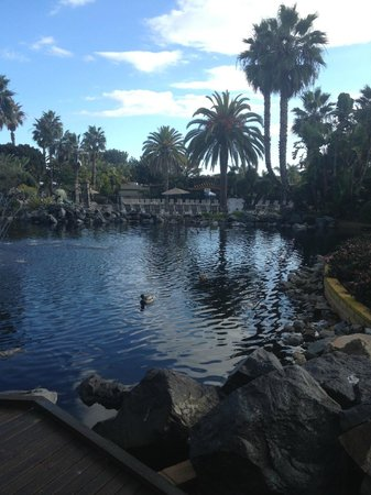 Paradise Point Resort & Spa: The same pond
