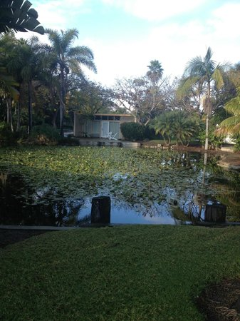 Paradise Point Resort & Spa: The pond