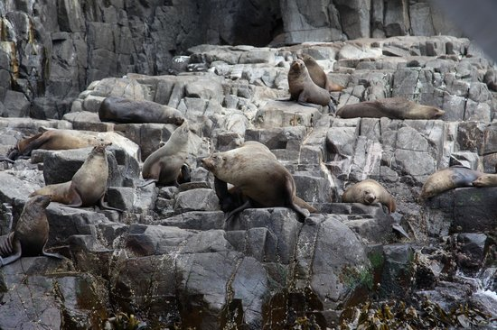 Bruny Wildlife Adventure:                                     seals - very smelly!
