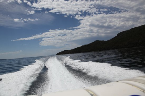 Bruny Wildlife Adventure:                                     from the back of the boat