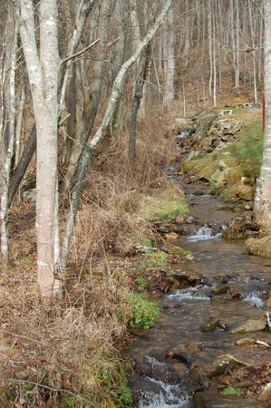 Compassionate Expressions Mountain Inn & Healing Sanctuary: The beautiful creek that runs alongside the property