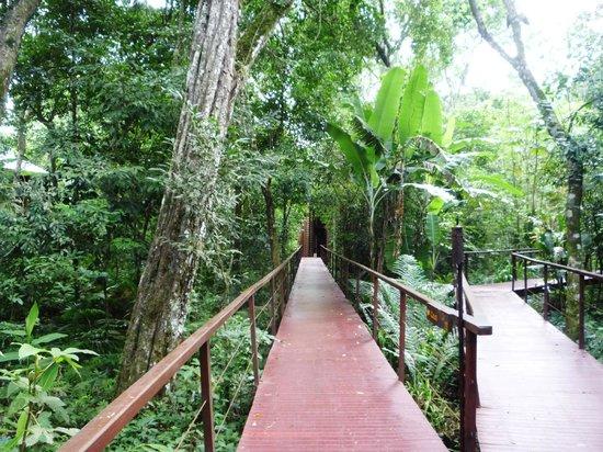 La Cantera Jungle Lodge: Pasarela de acceso a las habitaciones