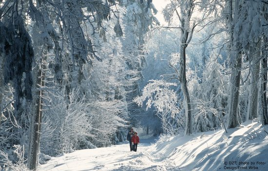 Tyskland: Mount Feldberg in the Taunus hills: Walkers in the snow