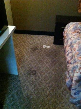 Claremont Hotel Las Vegas: carpet