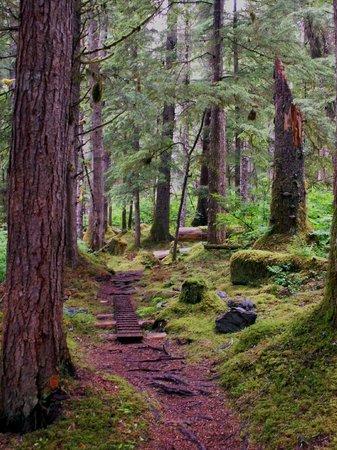 Glacier Bay's Bear Track Inn: Hiking Trail