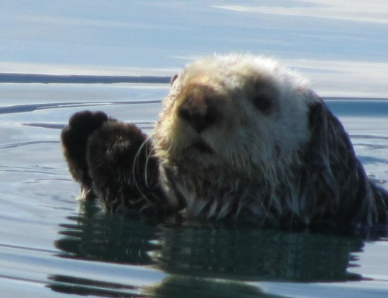 Glacier Bay's Bear Track Inn: Sea Otter