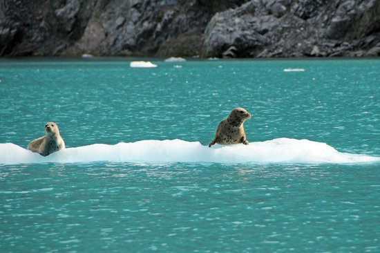 Glacier Bay's Bear Track Inn: Seals