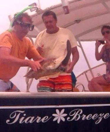 Tiare Breeze: Turtle Release