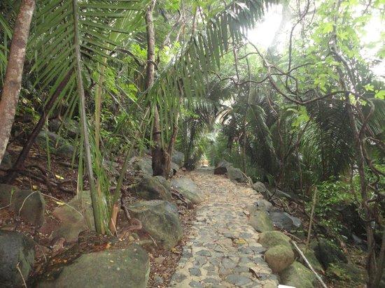 Majahua Hotel Selva: camino hacia las habitaciones