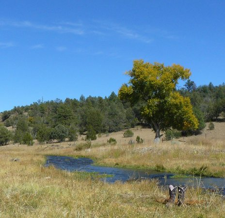 Geronimo Trail Guest Ranch: Relax and jump in the river for a little swim