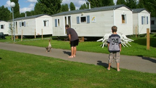 Camping Sandaya International de Maisons-Laffitte: Geese
