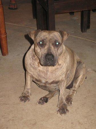 Empalme a Las Playas: Lyka.. such a sweet dog!