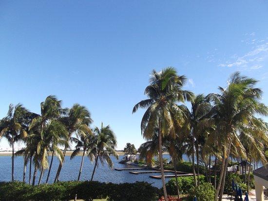 Hilton Miami Airport: palmeras y sol