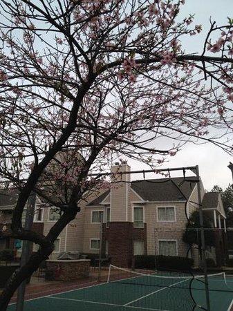 Residence Inn Atlanta Airport North/Virginia Avenue: cherry trees