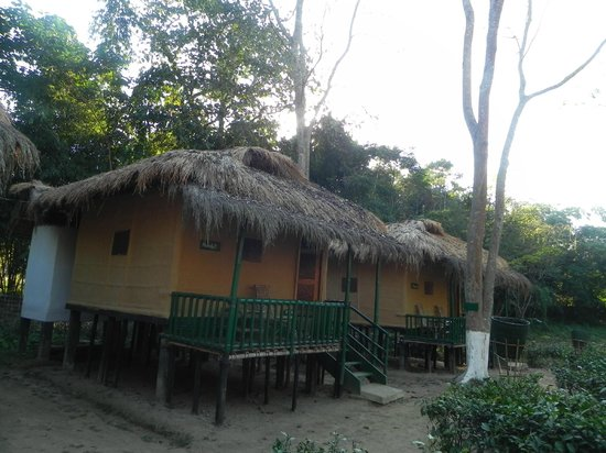 Nature Hunt Eco Camp, Kaziranga National Park: Our bunglows