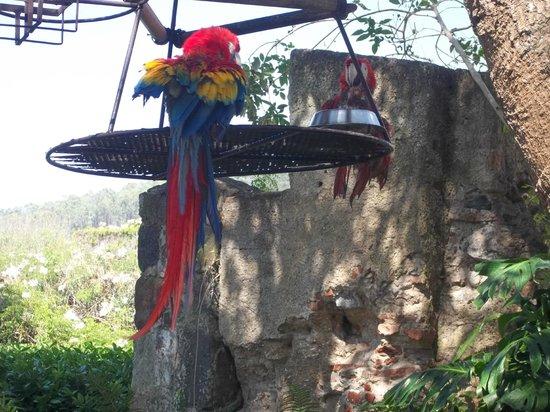 Hotel Museo Spa Casa Santo Domingo: guacamayas exoticas de la selva maya