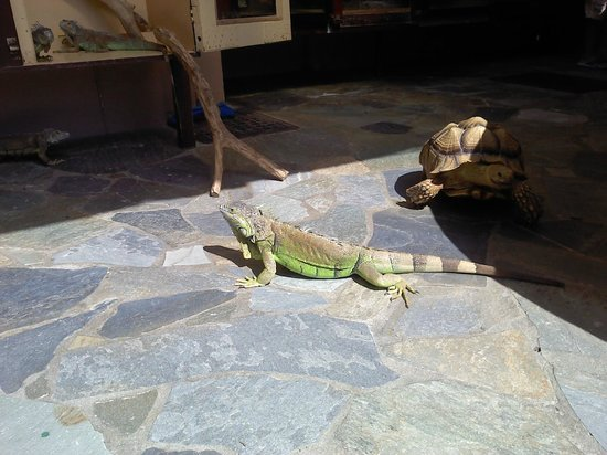 Aquaworld Aquarium & Reptile Rescue Centre: Sun therapy