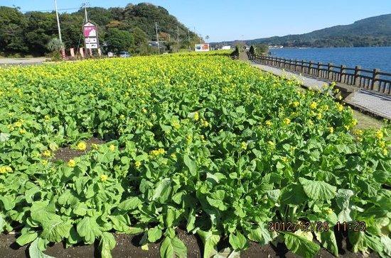 Ikeda Lake Paradise