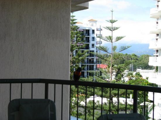 Warringa Surf Apartments: Rainbow Lorikeets, our early morning visitors.